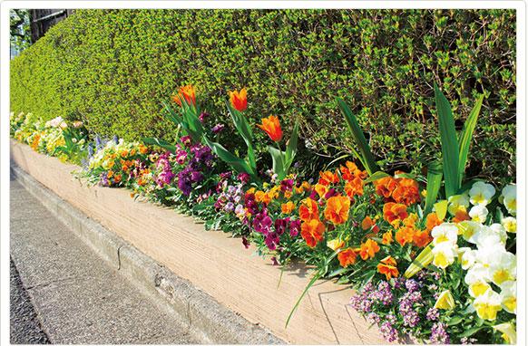花壇のテーマは「春の光」です。春の輝くやわらかな光を、黄色やオレンジを中心に様々な色を配置する事で表現しました。